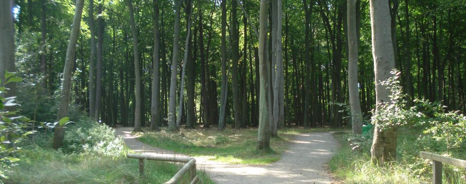 graal-mueritzer-wege-kuestenwald