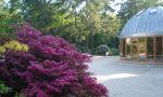 Im Graal-Müritzer Rhododendronpark finden ganzjährig Veranstaltungen im Konzertpavillon statt  Höhepunkt ist jedes Jahr das Parkfest zur Blütezeit des Rhododendrons