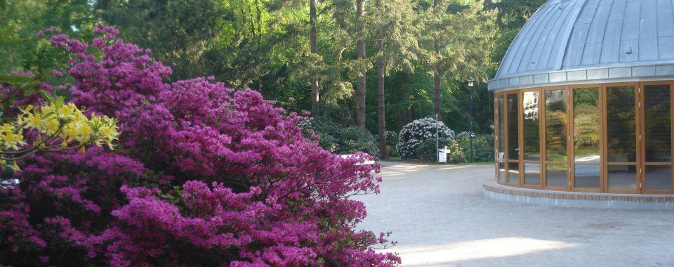 graal-mueritzer-rhododendronpark-direkt-hinter-der-ostsee-3