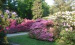 Vom Graal-Müritzer Rhododendronpark sind es nur noch wenige Schritte bis zur Ostsee