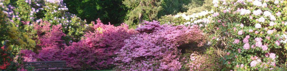 graal-mueritzer-rhododendronpark-direkt-hinter-der-ostsee-2