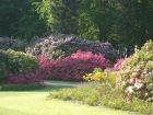 graal-mueritzer-rhododendronpark-direkt-an-der-ostsee